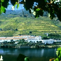 food-and-wine-tours-in-portugal