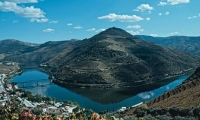 Douro Valley wineries & Vintage Vessel cruise (Day-Tour)